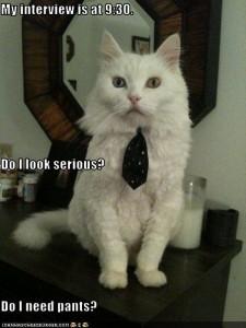 cat-job-resume